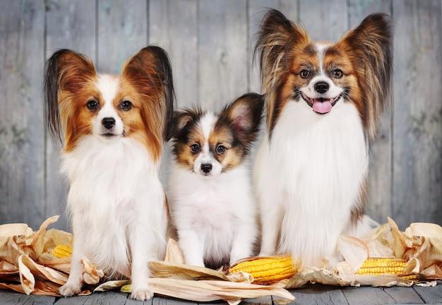 Famille Canine, Maman, Papa Et Chiot. Photo Premium