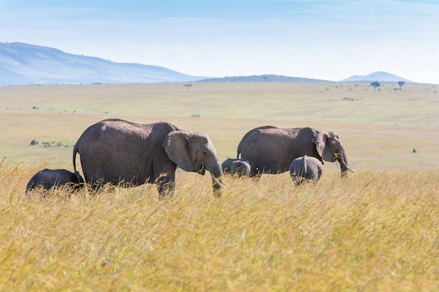 Famille D'éléphants Marchant Dans La Savane Photo gratuit