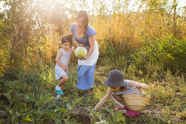 Famille récoltant des légumes sur le terrain Photo gratuit