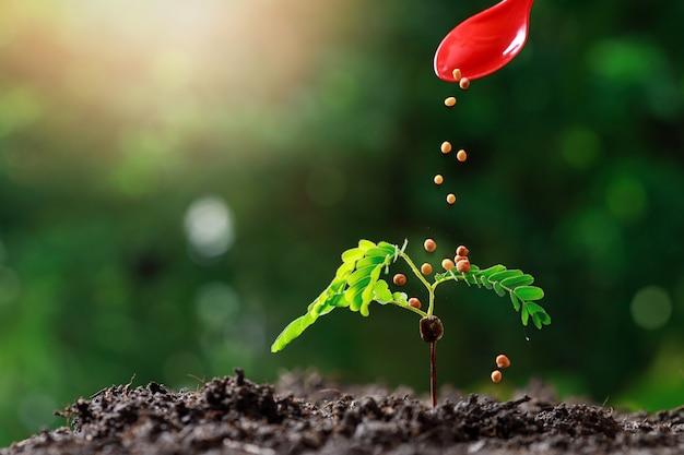 Farmer hand nourrir les jeunes plantes de bébé Photo Premium