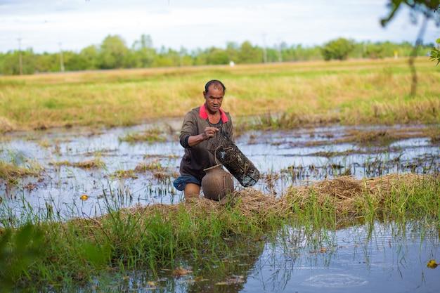 Farmer style de vie thaïlandais. les agriculteurs thaïlandais sont des pièges à poissons dans les rizières. Photo Premium