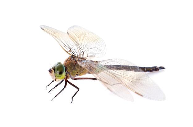 Fauconnier libellule Photo Premium