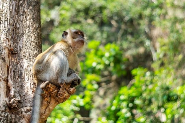 Faune de singe d'asie Photo Premium