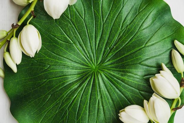 Fausse feuille de lotus à fleurs blanches Photo gratuit