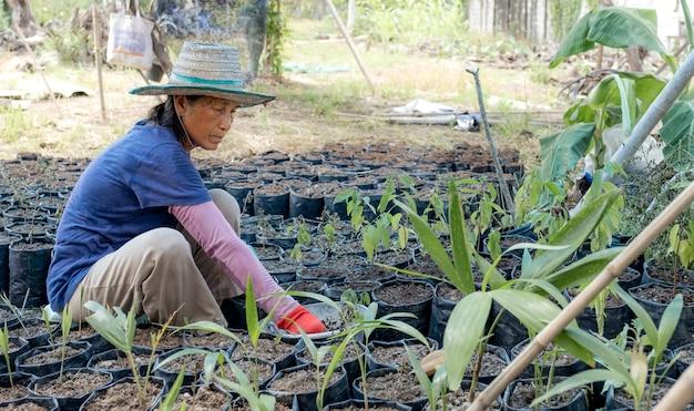 Une Femme âgée A Planté Des Arbres Dans Le Jardin, A Passé Son Temps Libre Après La Retraite. Photo Premium