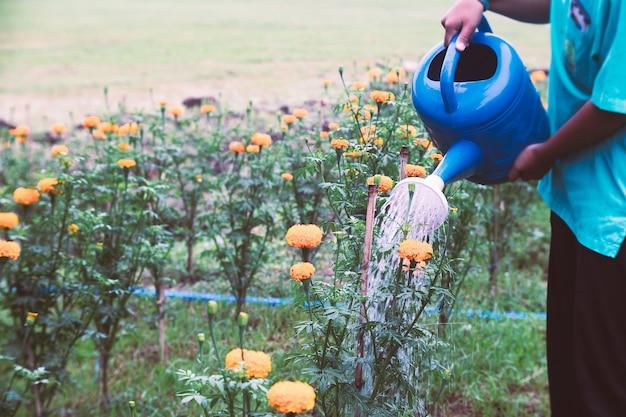 Femme arrosant des fleurs de souci dans le jardin Photo Premium