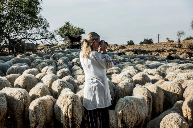 Femme blonde parmi un troupeau de moutons Photo gratuit