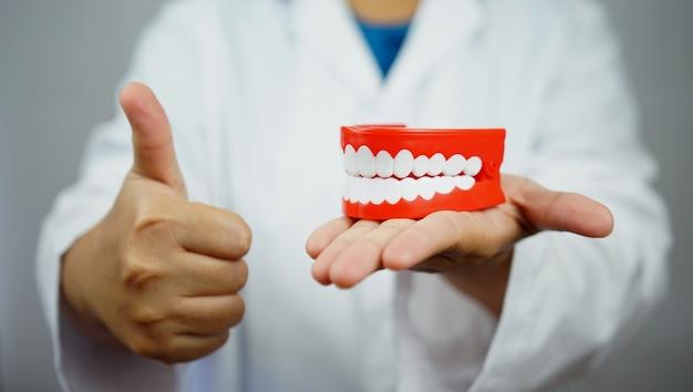 Femme Dentiste Tenant Une Prothèse Et Donnant Un Pouce Vers Le Haut. Photo Premium