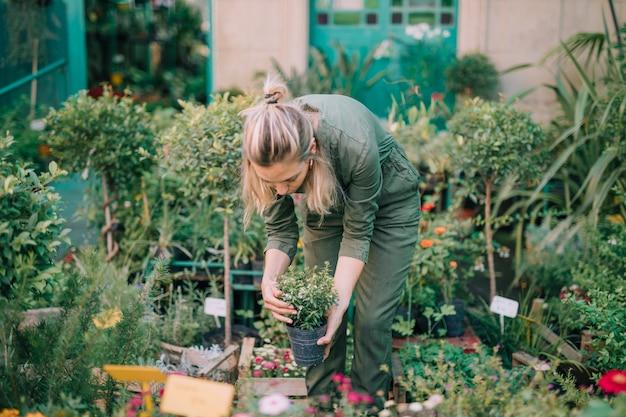 Femme jardinier organisant le pot en pépinière Photo gratuit