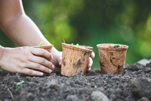 Femme main plantant de jeunes plants dans des pots de fibres recyclées dans le jardin Photo Premium