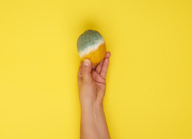 Femme Main Tenant Jaune Citron Entier Avec De La Moisissure Blanche Photo Premium