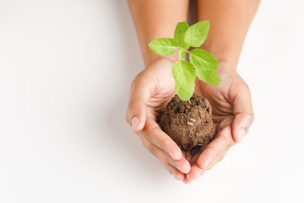Femme main tenant une petite plante sur fond blanc Photo Premium