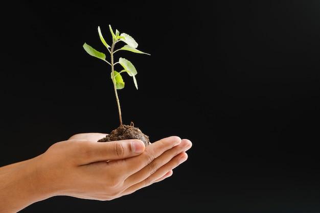 Femme main tenant une petite plante sur fond noir Photo Premium