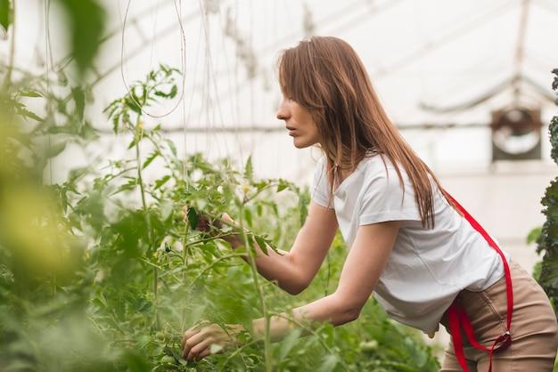 Femme prenant soin de plantes en serre Photo gratuit