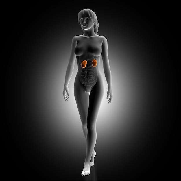 Femme avec des reins illuminés Photo gratuit