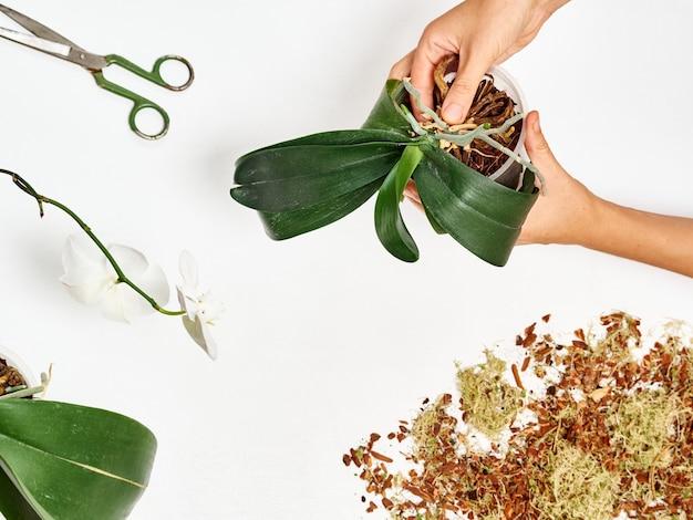 Femme, Repiquer, Orchidée, Chez Soi Photo Premium