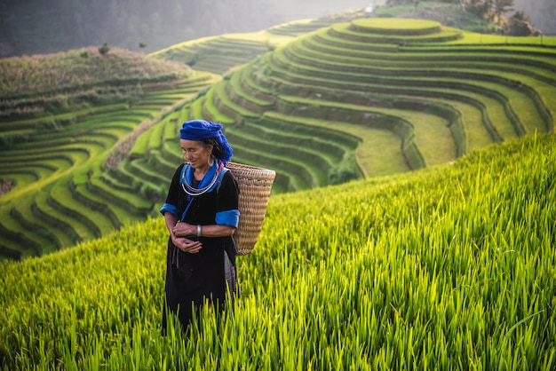 Femme sur rizière en terrasse vietnam Photo Premium