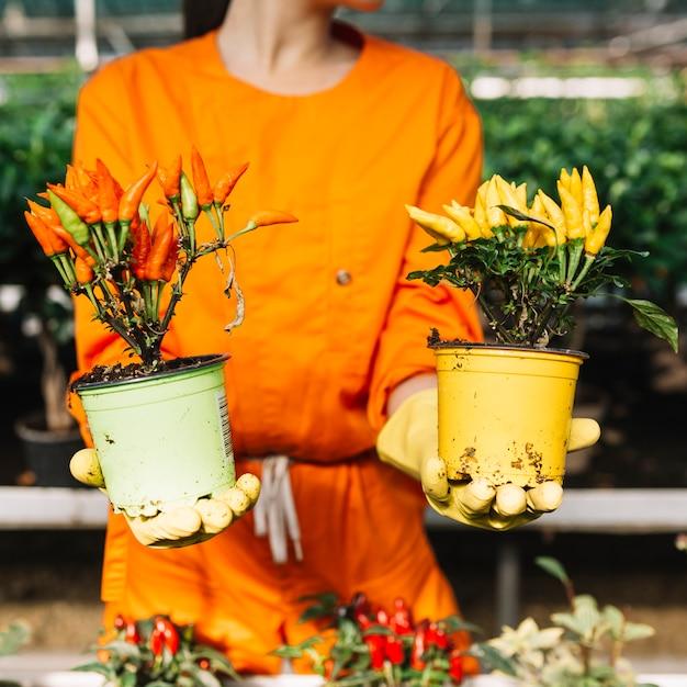 Femme tenant deux plantes en pot avec des piments rouges et jaunes Photo gratuit
