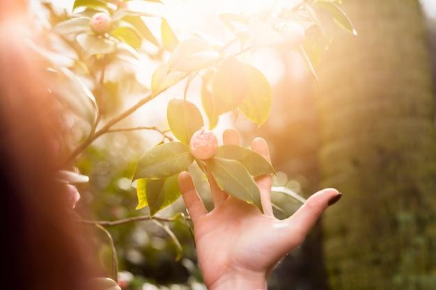 Femme, tenue, fleur rose, croissant, vert, brindille, buisson Photo gratuit