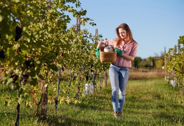 Femme travaillant dans un vignoble Photo Premium