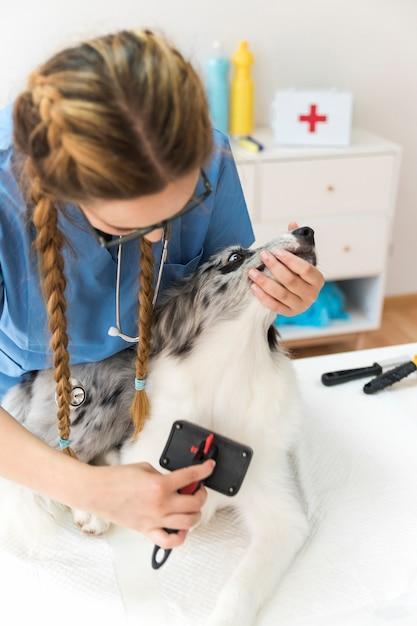 Femme vétérinaire toilettage des cheveux avec une brosse lisse Photo gratuit