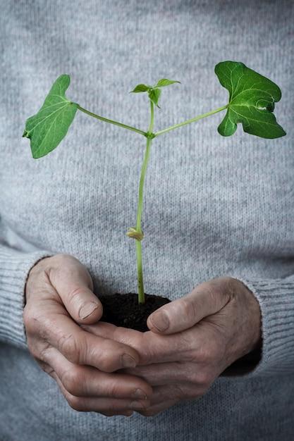 Femmes volontaires tenant des plantes en croissance Photo Premium