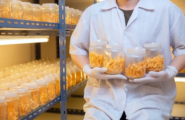 Ferme de cordyceps au concept d'idées chinois santé laboratoire propre herbe sur la main de l'agriculteur à la ferme. Photo Premium