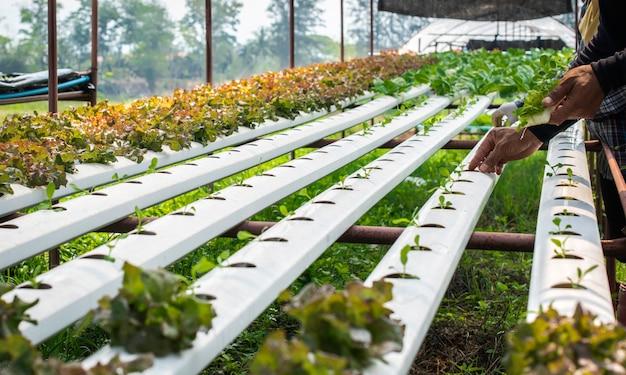 La Ferme De Culture Hydroponique De Légumes Bio En Milieu Rural. Photo Premium
