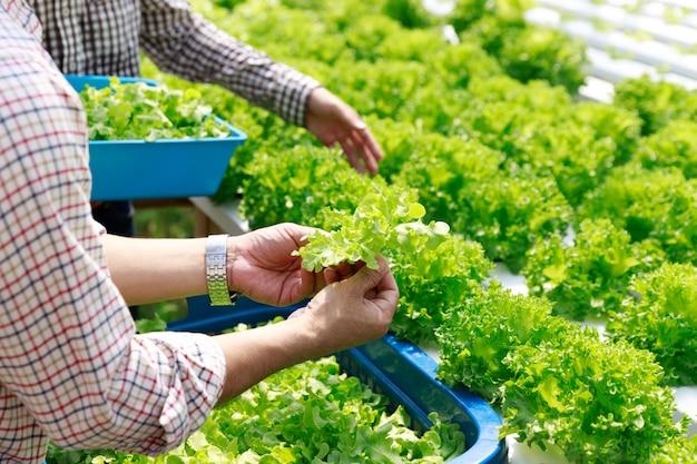 Ferme Hydroponique, Récolte De Travailleurs Et Collecte De Données Environnementales à Partir De Légumes Hydroponiques Biologiques De Laitue Dans Le Jardin De La Serre. Photo Premium