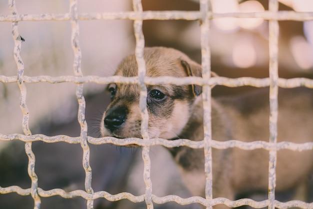 Fermer un chien errant chiot, vie seule en attente de nourriture. chien errant sans abri abandonné est couché dans la fondation. petit chien triste abandonné en cage. Photo Premium