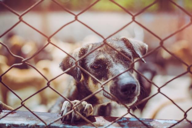 Fermez un chien errant. chien errant sans abri abandonné est couché dans la fondation. Photo Premium