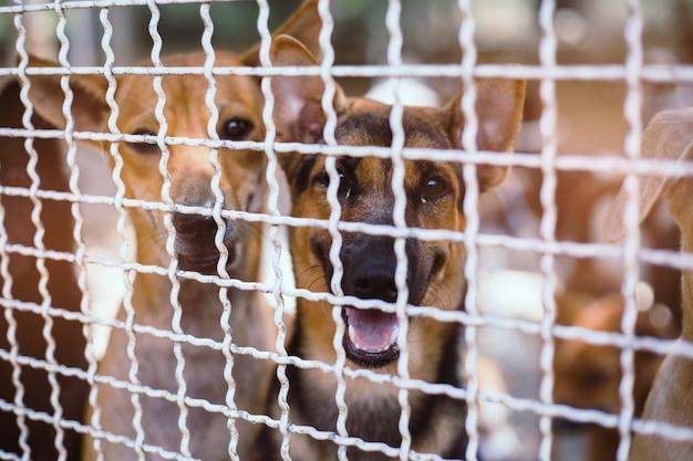 Fermez les chiens errants. des chiens errants sans abri abandonnés sont couchés dans les fondations. Photo Premium