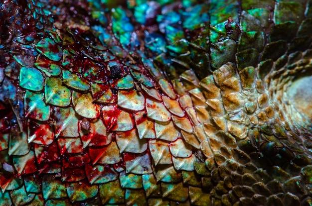 Fermez la peau de vrai caméléon, la texture de peau de blessure de caméléon pour votre conception. Photo Premium