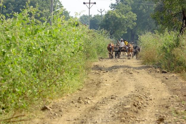 Fermier Indien Sur Charrette Photo Premium