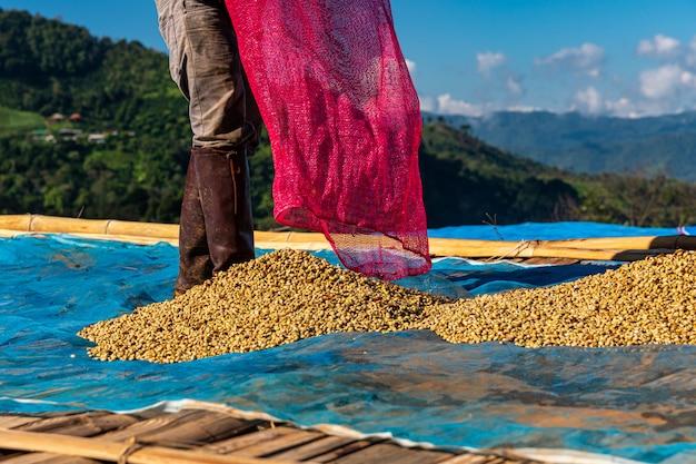 Fermier séchant des grains de café crus sur le sol Photo Premium