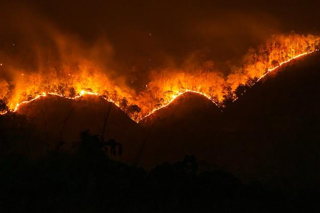 Feu. feu de forêt, forêt de pins en flammes dans la fumée et les flammes. Photo Premium