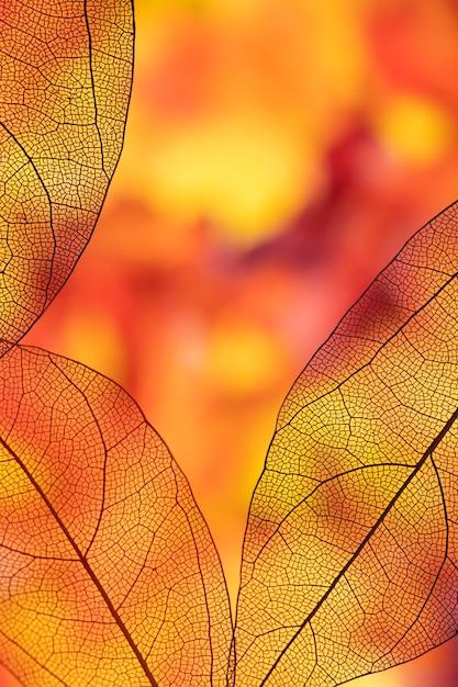 Feuillage d'automne transparent coloré Photo gratuit