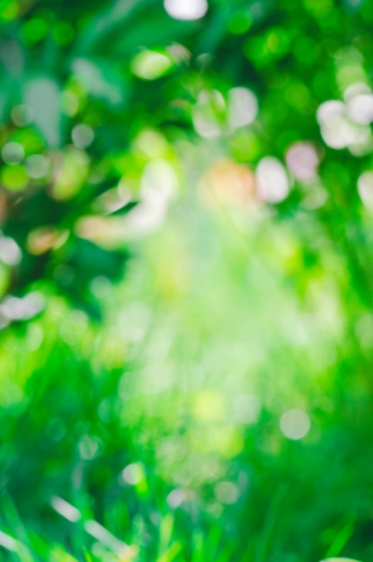 Feuillage de bokeh vert flou. Photo Premium