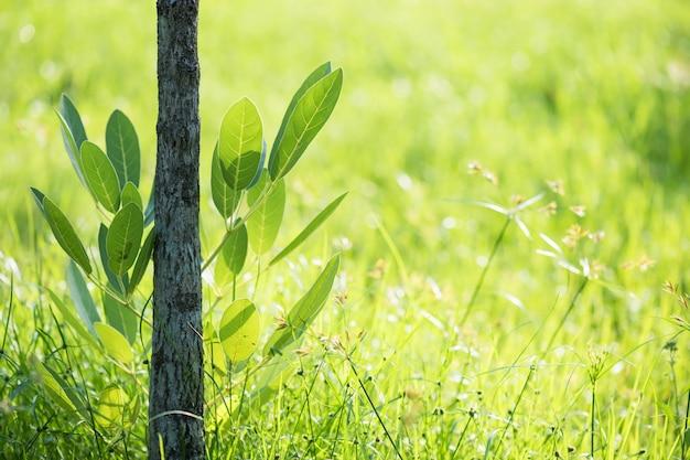 Feuillage vert avec fond naturel de bokeh Photo Premium