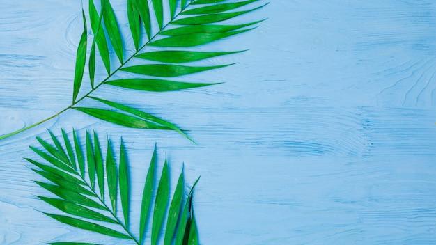Feuillage vert frais Photo gratuit