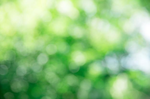 Feuillage Vert Avec Lumières Bokeh Photo Premium