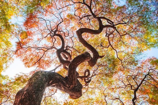foto de Feuille D'arbre De Ginkgo Jaune En Automne Chute Saison Ciel Bleu ...