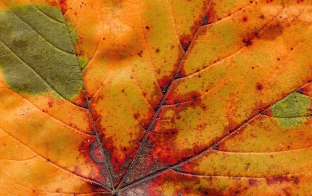 Feuille d'automne bouchent Photo Premium