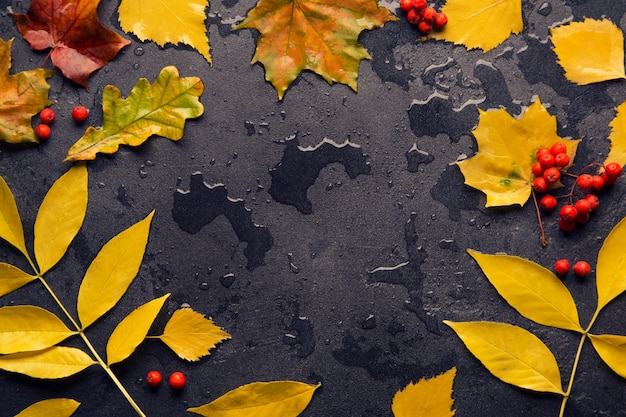 Feuille d'automne coloré après la pluie Photo Premium