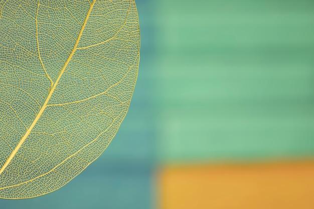 Feuille d'automne coloré avec espace de copie Photo gratuit