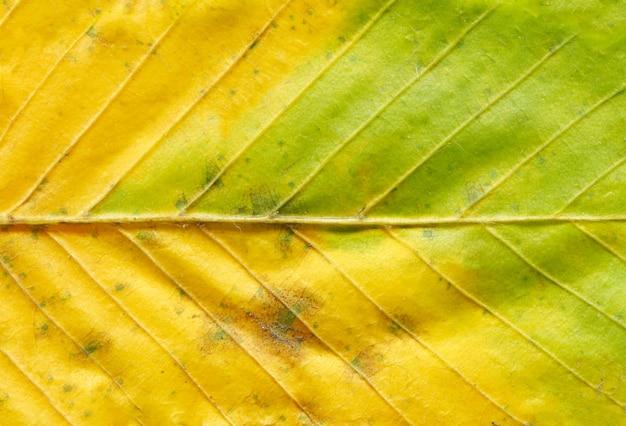Feuille d'automne coloré Photo Premium