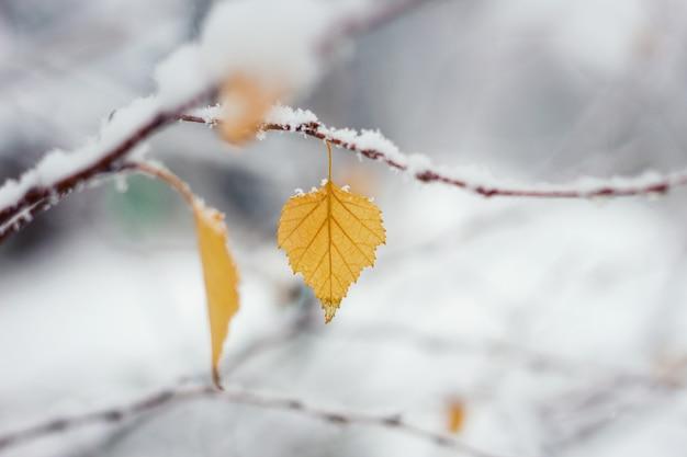 Feuille d'automne dans la neige, début d'hiver Photo Premium