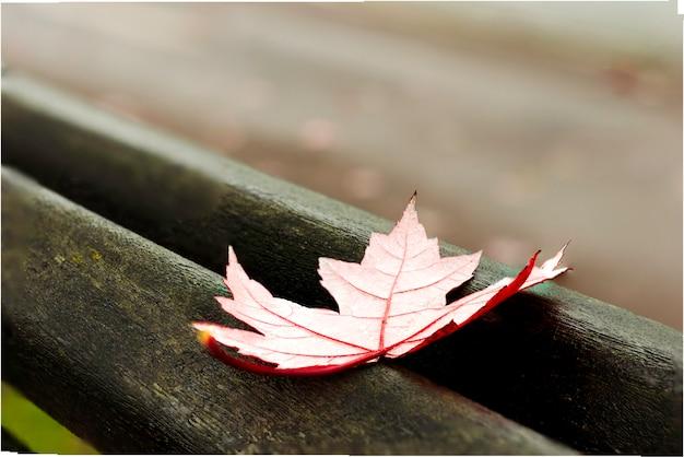Feuille d'automne d'érable rouge sur un vieux banc de parc rouge Photo Premium
