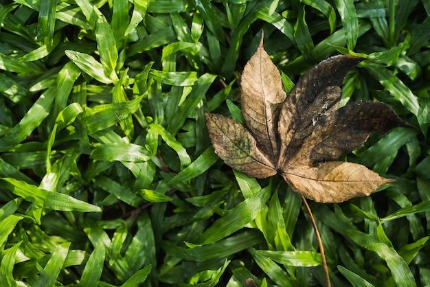 Feuille d'automne tombée jette une ombre pointue sur un champ vert Photo Premium