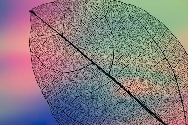 Feuille d'automne verte abstraite vibrante Photo gratuit
